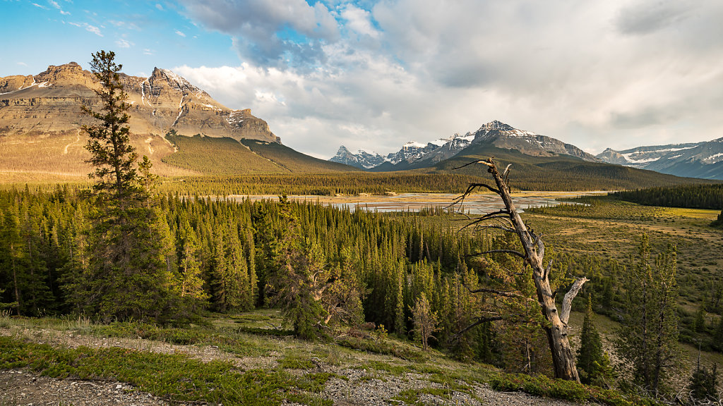 Howse Pass Viewpoint